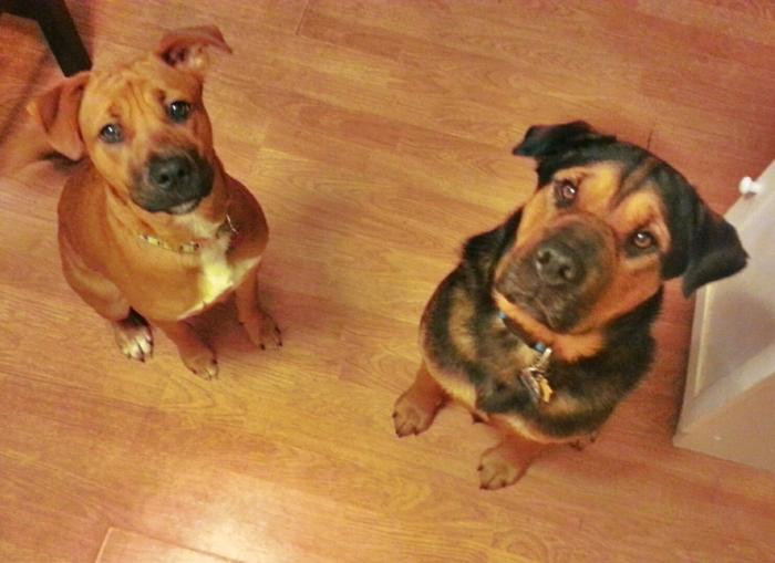 dog treat2